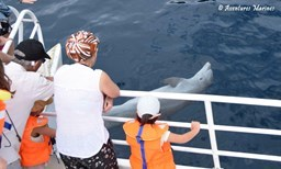 Activité Aventures Marines offer Dolphin, Sperm whale and Whale watching. image