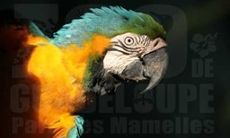 hebergement Zoo de Guadeloupe offer Zoological and botanical visit in tropical forest image